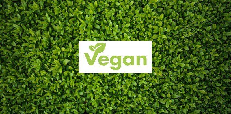 media/image/schlafshop-veganSKqghF7xGdOiv.jpg